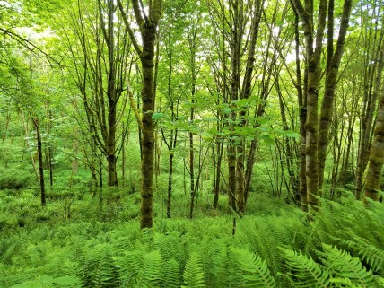 Beautiful ferns covered the floor of the forest.