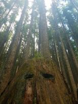 The trees seemed to have eyes in this forest