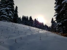Morning Snow